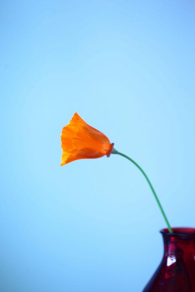 vetrine-festa-della-mamma,vaso-con-fiore-e-sfondo-celeste,-COMINshop