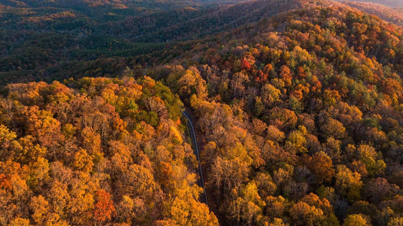 vetrine-autunnali,-bosco-d'autunno,-articolo-blog-COMINshop