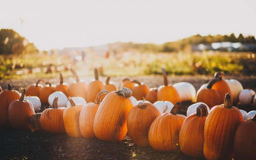 Vetrine di Halloween, oltre le ragnatele e i fantasmi