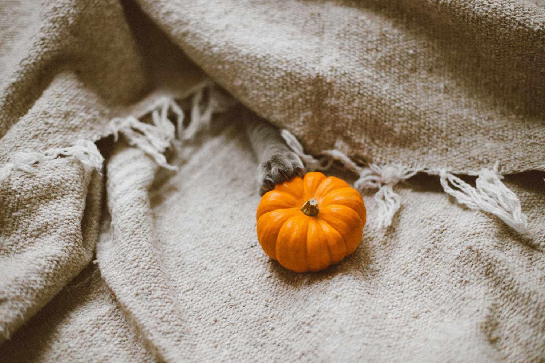 vetrine-di-halloween,-piccola-zucca-su-un-tessuto-bianco