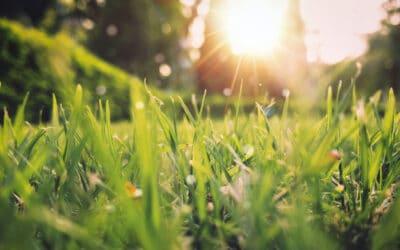 La natura si risveglia, idee per delle vetrine di primavera
